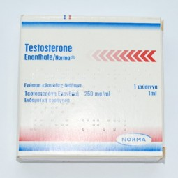 Testosterone Enanthate 250 mg (Norma)